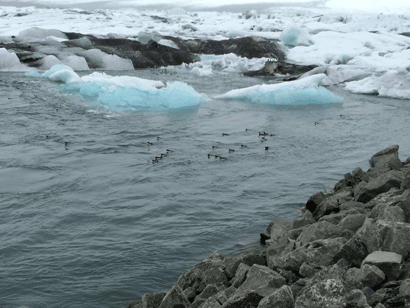 Reisetipps für Island: Jökulsárlón