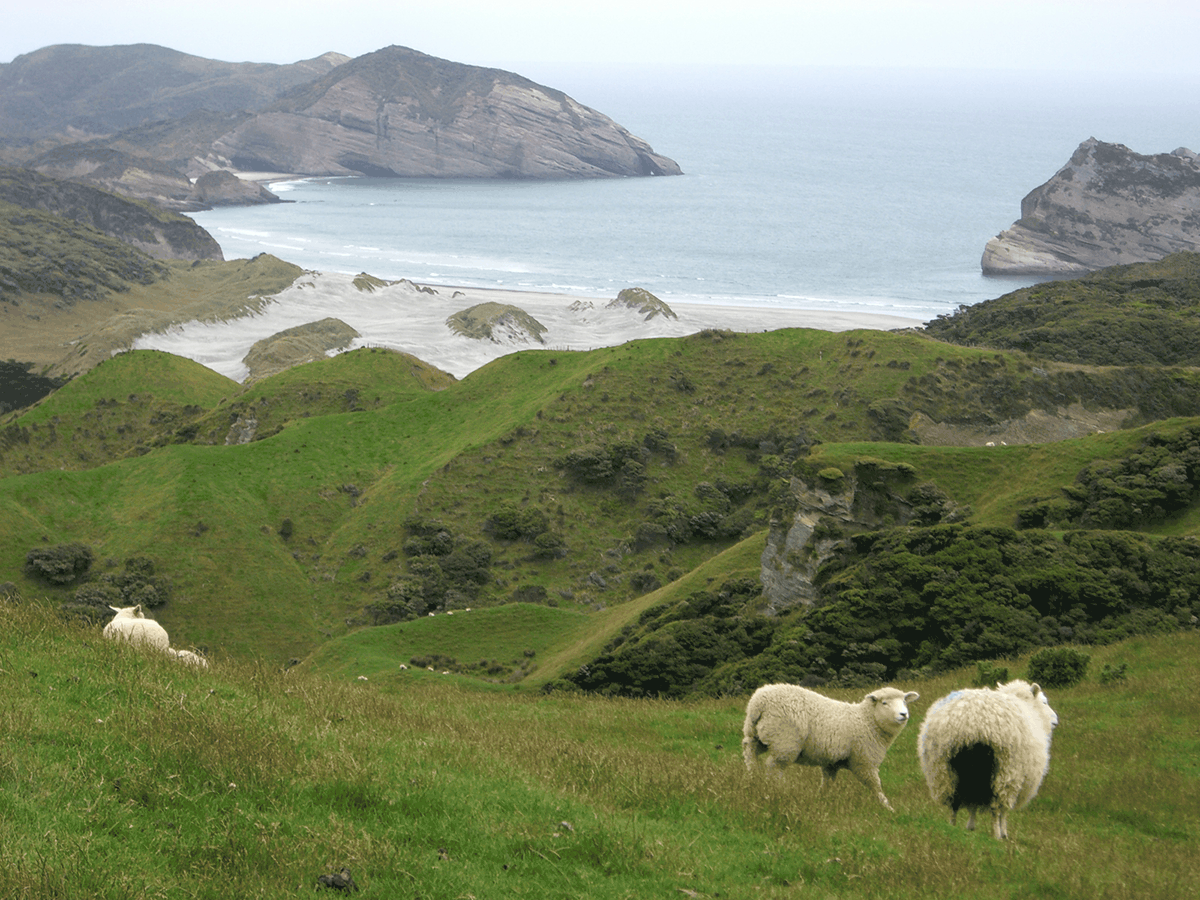 lauf-FAQ_Neuseeland