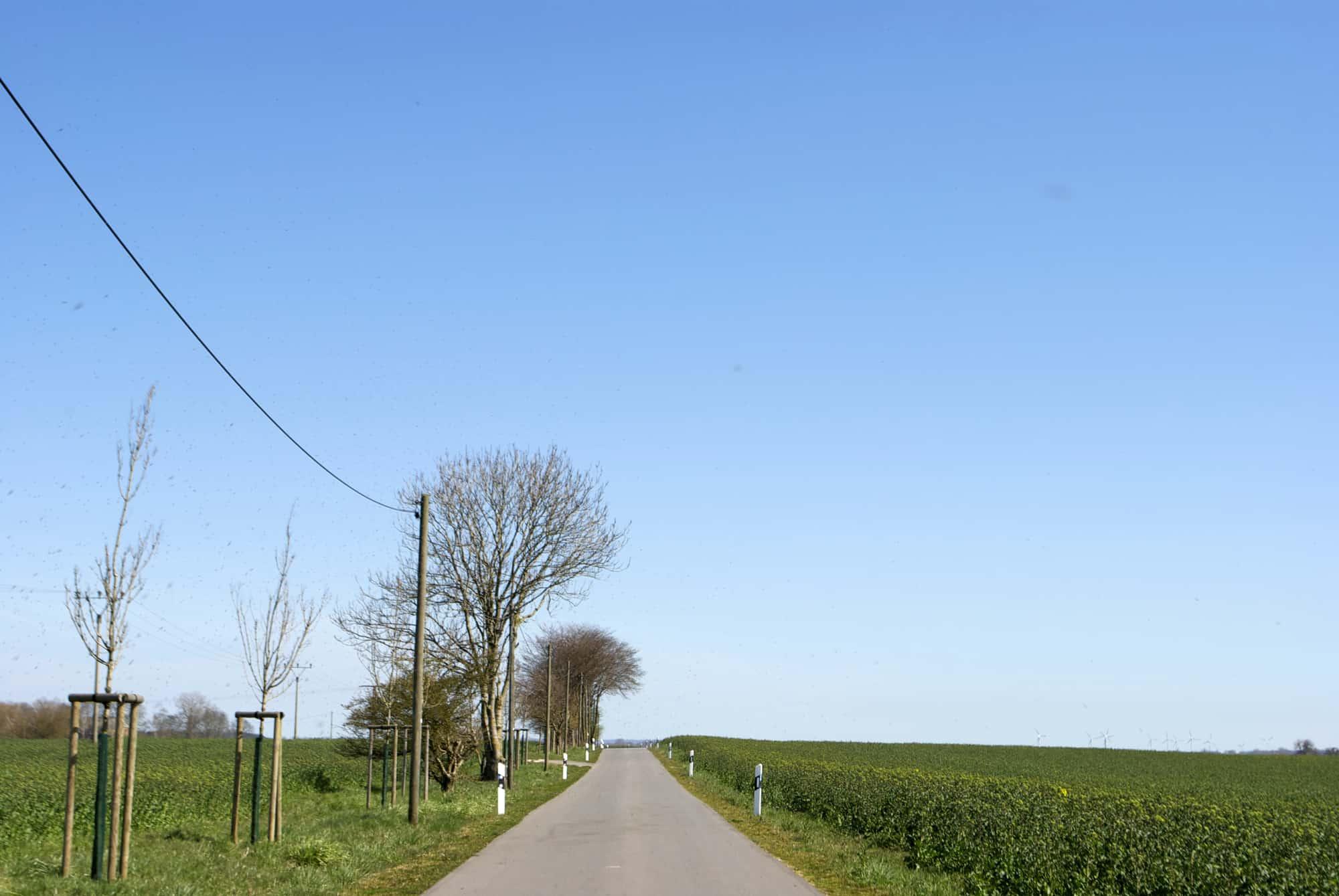Landstraße auf Ummanz