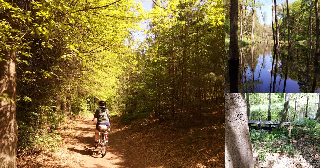 gogirlrun_brandenburg_fahrradfahren_briesetal_liepnitzsee6