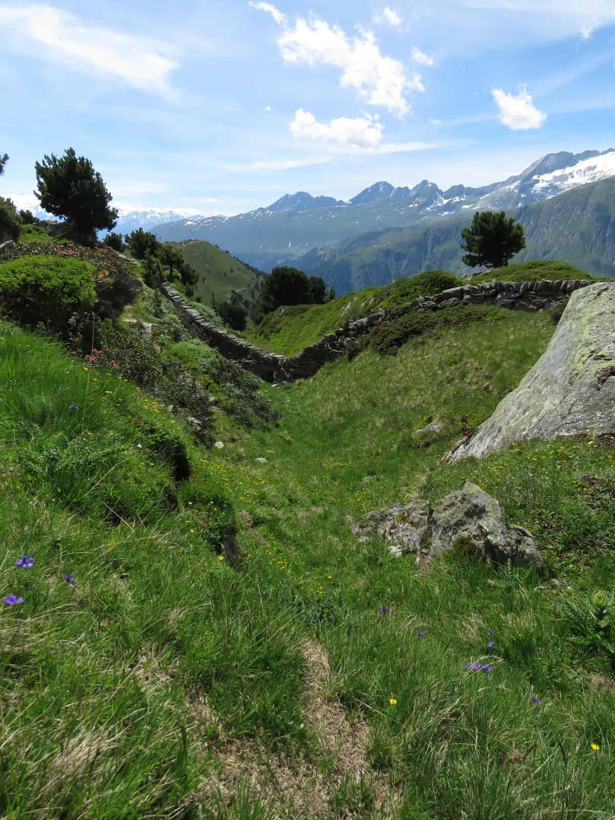 Aletschwald Pro Natura
