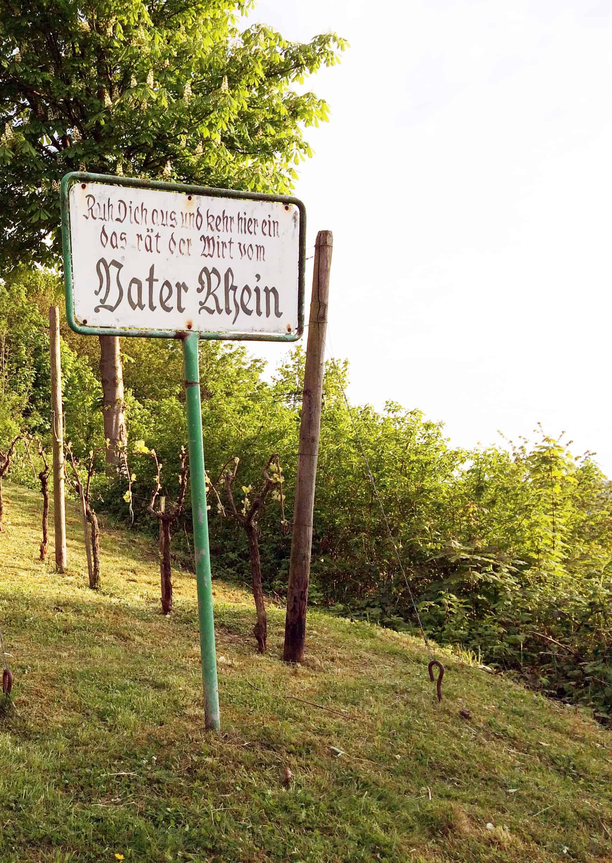 Wandern im Siebengebirge bei Bonn
