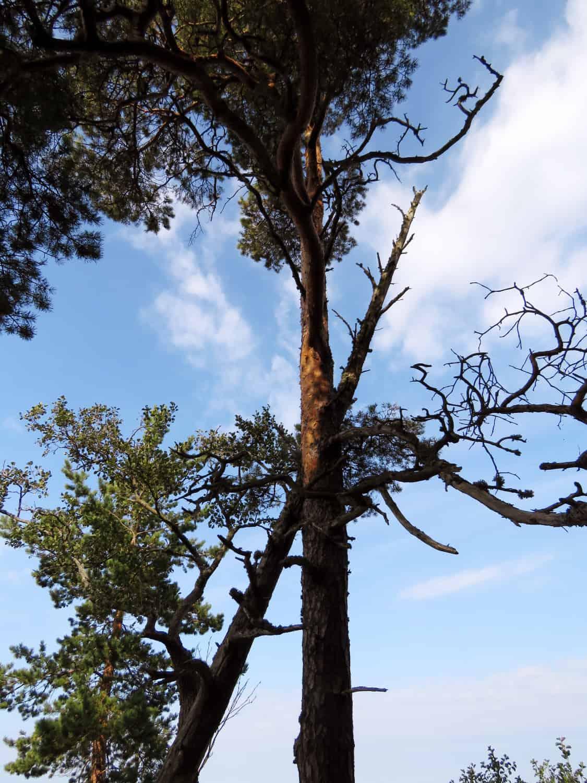 gogirlrun_estland_outdoor_wandern_lahemma-nationalpark_12