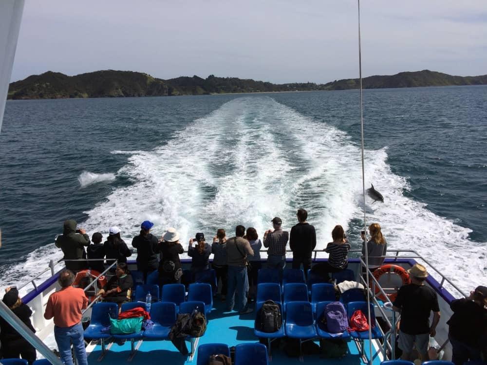 neuseeland-northland-dolphins
