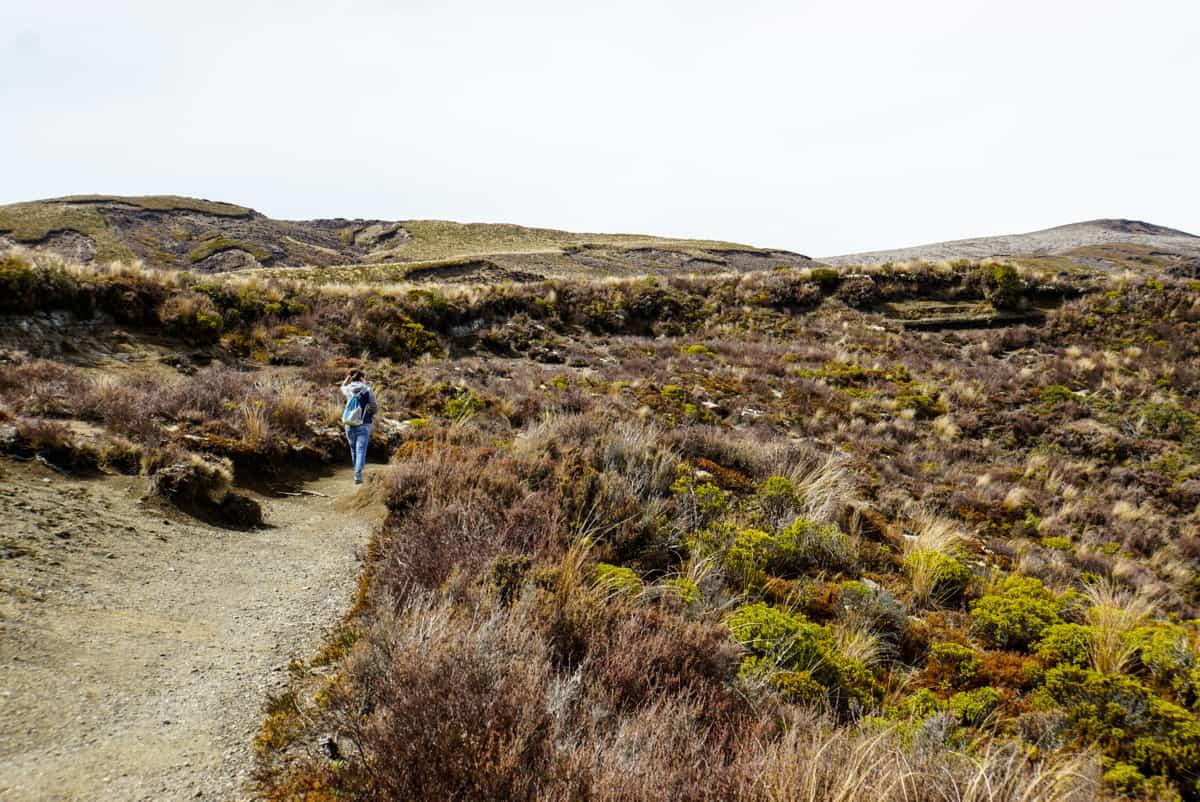 wandern-im-tongariro-nationalpark-10