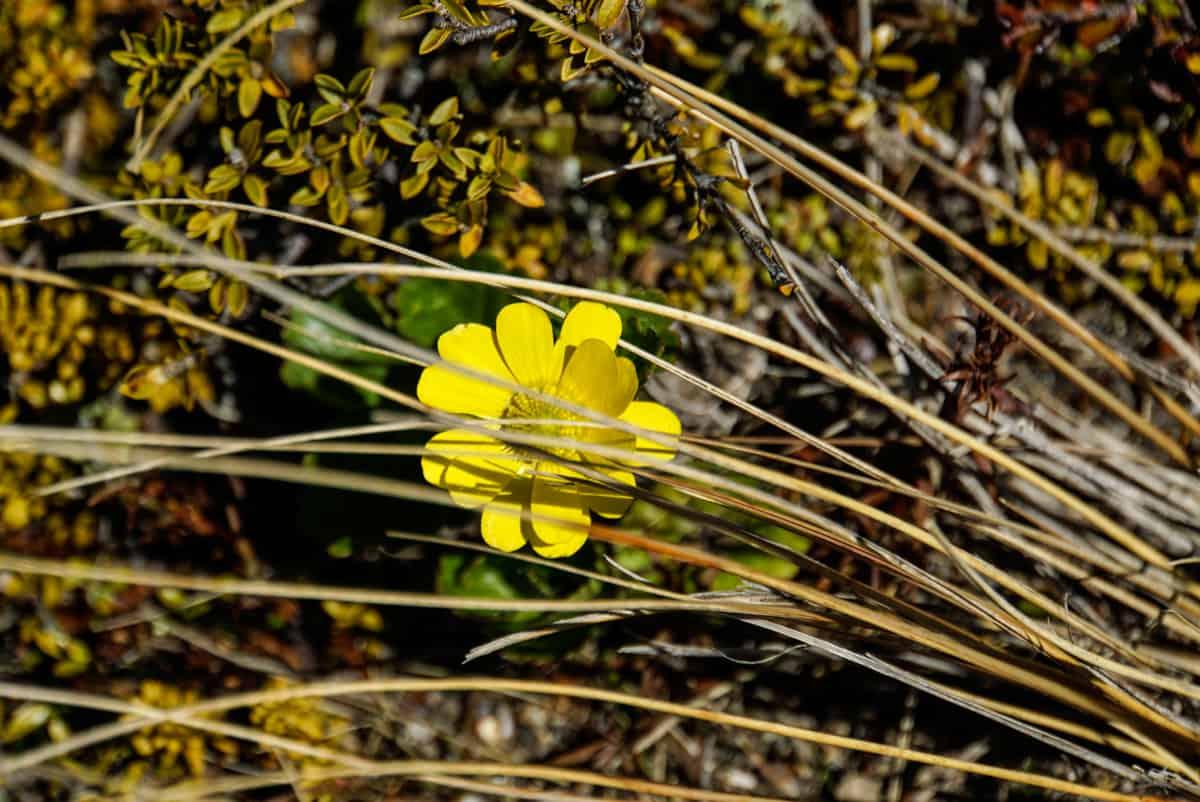 wandern-im-tongariro-nationalpark-30