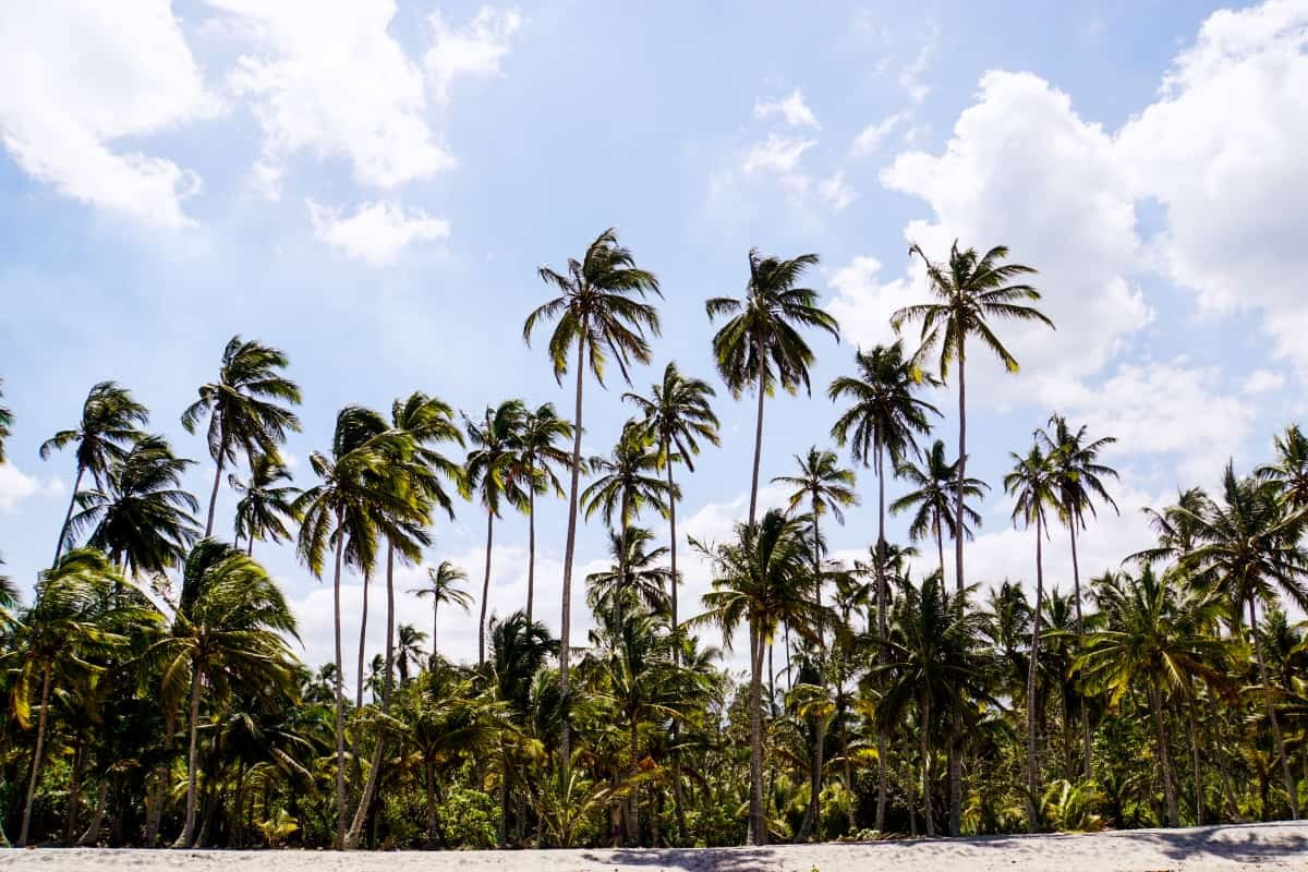 Palmenstrand bei Palomino